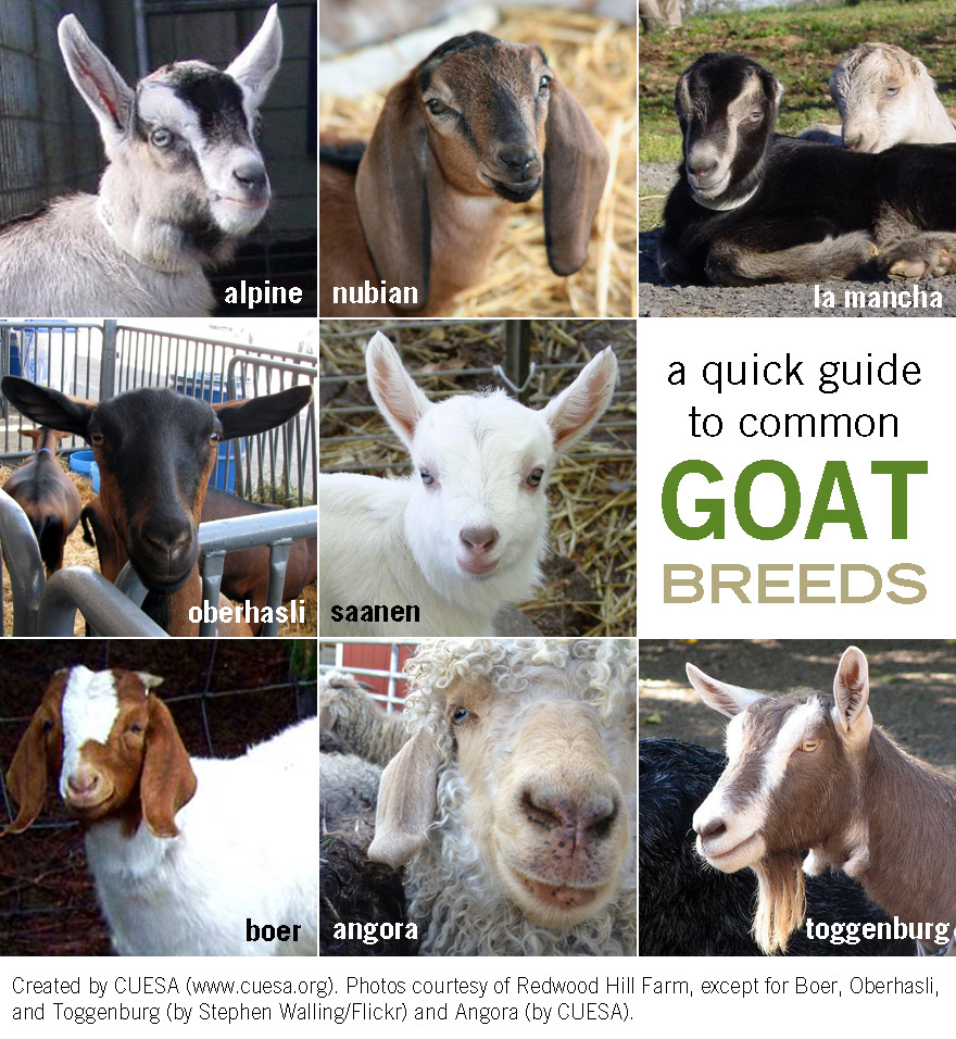 Know Your Goats | CUESA