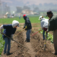 mendoza family working their farm