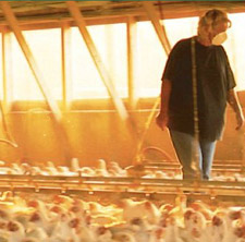 food inc chicken house