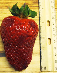 strawberry ruler