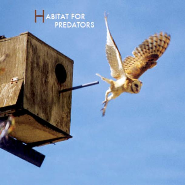 Habitat for Predators