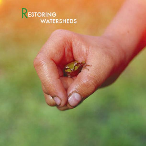 Restoring Watersheds