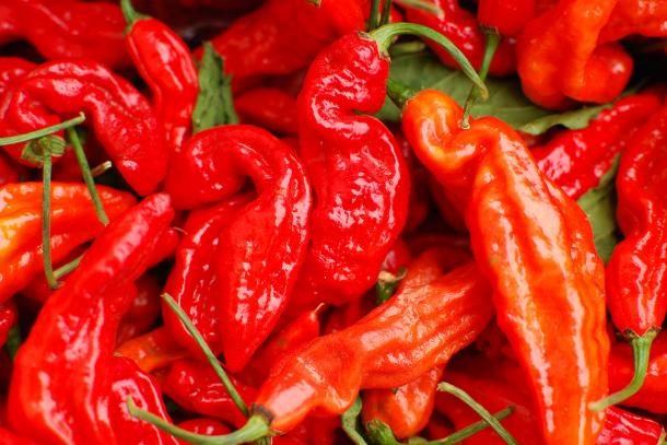From Sweet to Heat: A Farmers Market Guide to Peppers   CUESA