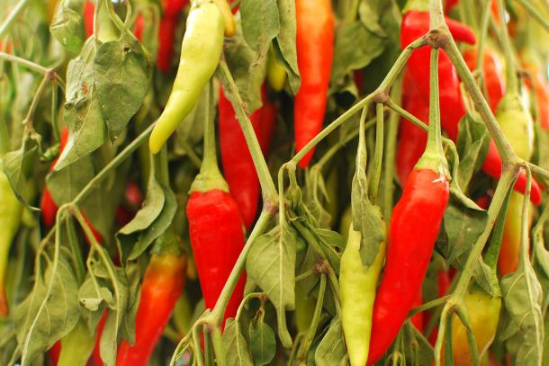 From Sweet to Heat: A Farmers Market Guide to Peppers | CUESA