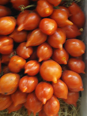 sites/default/files/terra_madre_tomatoes.jpg