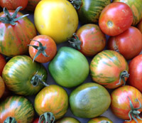 sites/default/files/tomatoes_colorful.jpg